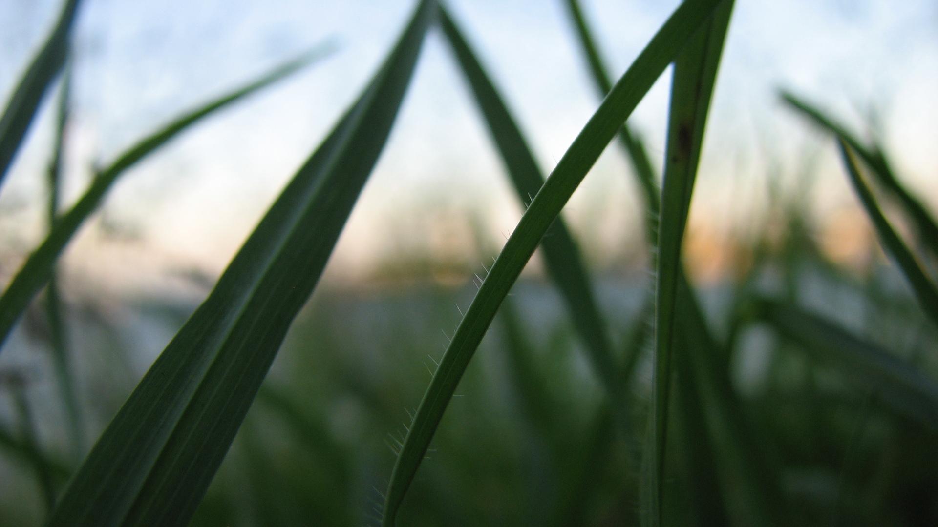 grass-always-greener-1169144-1920x1080